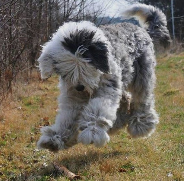 Sprocket Dog Breed